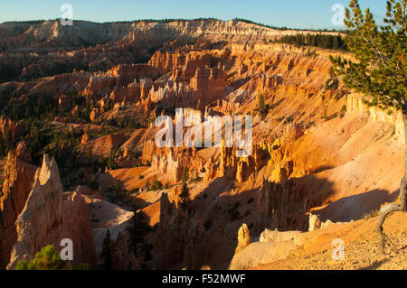 Vue de l'aube point, Bryce Canyon, Utah, USA Banque D'Images
