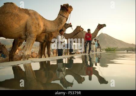 Les commerçants de chameau vendre leur bétail à l'occasion de la plus grande foire annuelle du bétail dans la ville Banque D'Images