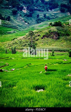 Un garçon marche dans les rizières en terrasses de la vallée de Muong Hoa, Lào Cai Provence, au nord-ouest du Vietnam. Banque D'Images