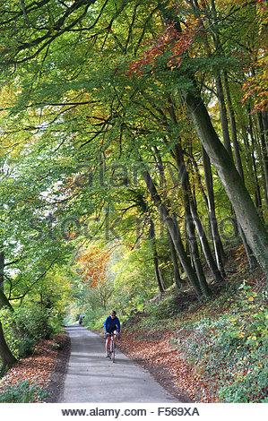 Un cycliste traverse trois oliviers bois, une ancienne forêt de hêtre dans les Cotswolds, près de Chalford, Stroud, Banque D'Images