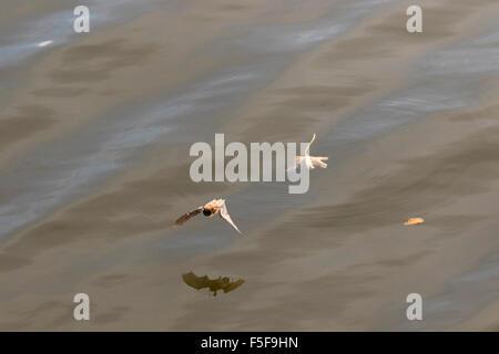 Bateau volant au-dessus de l'eau Banque D'Images
