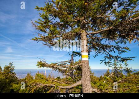 Sentier de randonnée pédestre sign painted on tree, faible profondeur de champ. Banque D'Images