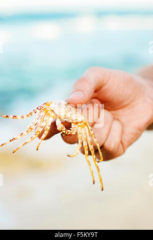Le Mexique, Cancun, Hand holding crab Banque D'Images