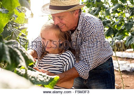 Grand-père debout derrière sa petite-fille tendant aux plantes Banque D'Images
