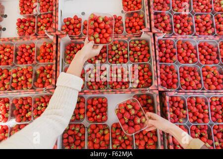 Portrait de mains tenant les fraises sur l'affichage en mode de blocage Banque D'Images