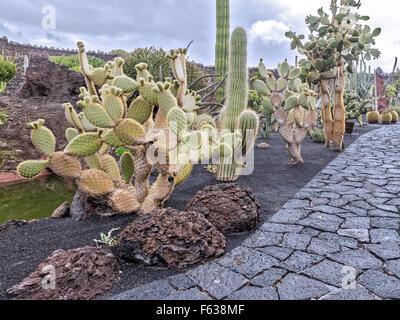 Guatiza jardin de cactus Lanzarote Iles Canaries Banque D'Images
