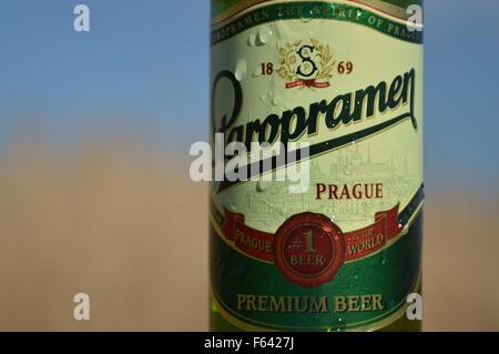Gouttes d'eau sur la bouteille de bière de marque de l'usine d'origines et de ciel bleu Banque D'Images