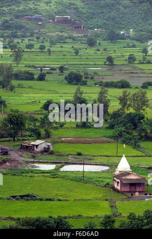 Temple en rizières, malavli, Pune, Maharashtra, Inde, Asie Banque D'Images