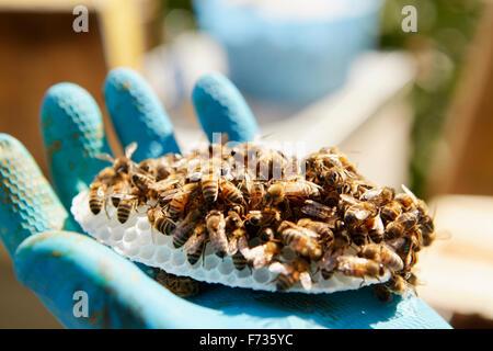 Une main tenant un petit plastique forme en nid d'abeilles à couvert. Banque D'Images