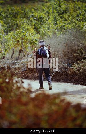 Une vieille vigne travailleur dans l'Algarve. Le Portugal. L'Europe Banque D'Images