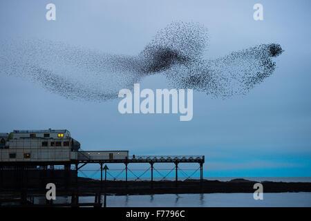 Aberystwyth, Pays de Galles, Royaume-Uni. 26 novembre, 2015. Un immense troupeau d'étourneaux effectuer affiche Banque D'Images