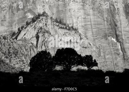 La silhouette des arbres et du Temple et les tours de la Vierge. Zion National Park, Utah Banque D'Images