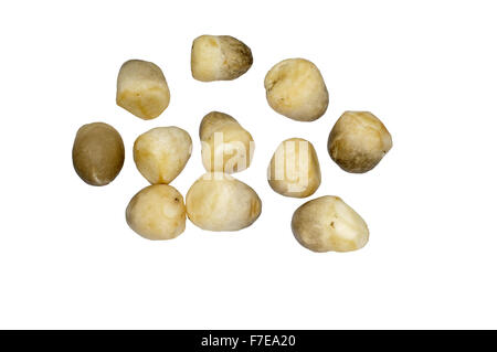 Champignons de paille de riz Banque D'Images