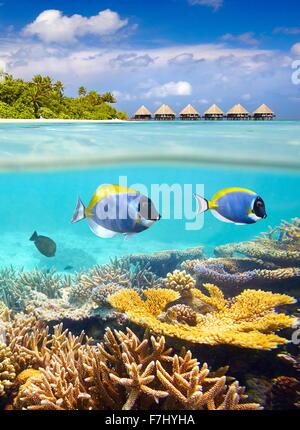 Îles Maldives - tropical vue sous-marine avec les poissons et le récif Banque D'Images