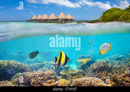 Maldives Island - vue sous-marine avec des poissons Banque D'Images