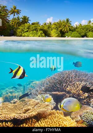 Îles Maldives - vue sous-marine à poissons tropicaux et reef Banque D'Images
