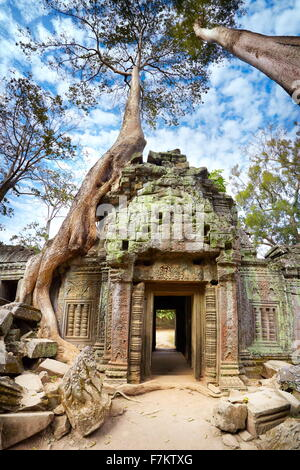 Angkor - les ruines de Ta Prohm Temple, Cambodge, Asie Banque D'Images
