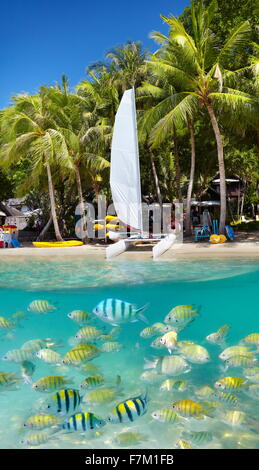 Thaïlande - plage tropicale de l'Île de Ko Samet avec vue sous-marine, la Thaïlande, l'Asie Banque D'Images