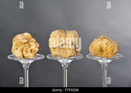 La vie d'une truffe toujours placé sur le socle en verre sur fond noir Banque D'Images