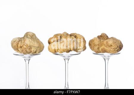 La vie d'une truffe toujours placé sur le socle en verre sur le fond blanc Banque D'Images