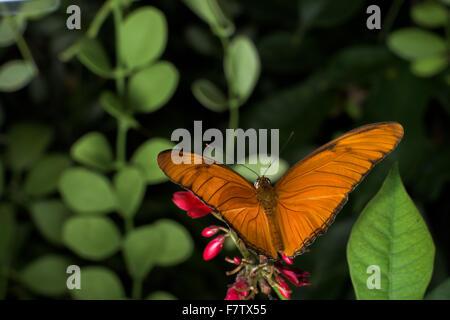 Les papillons sont des insectes qui ont un corps de ver et ailes haute en couleur Banque D'Images