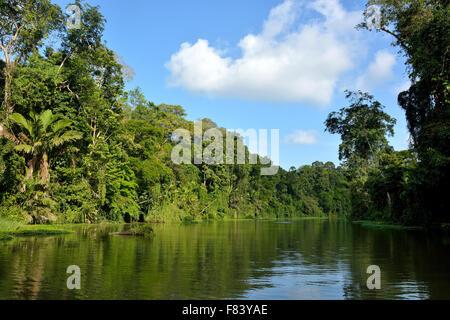 Paysage de Parc National de Tortuguero Costa Rica Banque D'Images