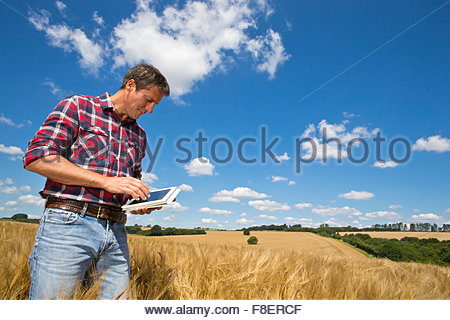 Farmer using digital tablet in rural crop field orge ensoleillée en été Banque D'Images