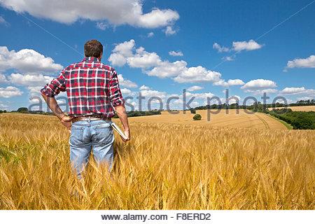 Agriculteur à la recherche sur le champ de la récolte d'orge rural ensoleillée en été Banque D'Images