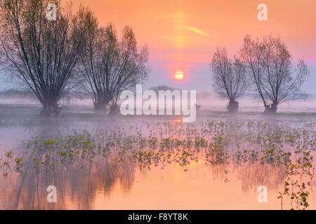 Lever du soleil paysage à Parc national de Biebrza, Pologne Banque D'Images