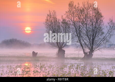Lever du soleil paysage à Parc national de Biebrza, Podlasie région, Pologne Banque D'Images