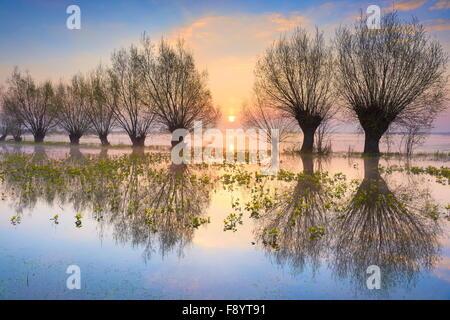 Pologne paysage - lever du soleil à Parc national de Biebrza, Pologne Banque D'Images