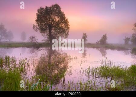Lever du soleil à Parc national de Biebrza, Paysage de printemps, Pologne Banque D'Images