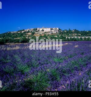 Champ de lavande en fleurs et Sault village perché, Vaucluse, Provence, France, Europe Banque D'Images