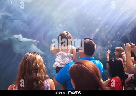 Les gens qui regardent un ours polaire à nager sous l'eau le voyage à Churchill, Zoo du Parc Assiniboine, Winnipeg, Banque D'Images