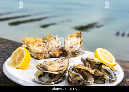 Une demi-douzaine d'huîtres avec un citron sur une plaque en plastique de manger à l'extérieur près de la mer Banque D'Images