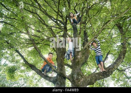 Les enfants de grimper sur arbre, Munich, Bavière, Allemagne Banque D'Images