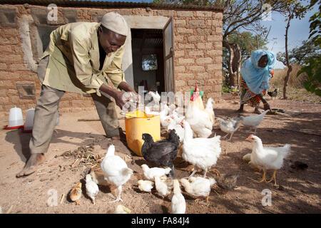 Les agriculteurs travaillent à l'extérieur de la famille poulailler à Tengréla, village du Burkina Faso. Banque D'Images