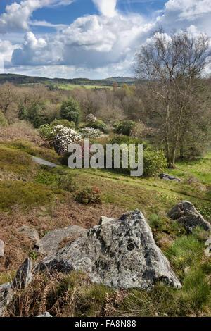 La vue depuis l'éperon rocheux à l'égard Bradgate Park, à partir d'Stoneywell, Leicestershire. Banque D'Images