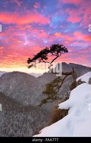 Seul arbre dans le Parc National des Pieniny au coucher du soleil, Pologne Banque D'Images