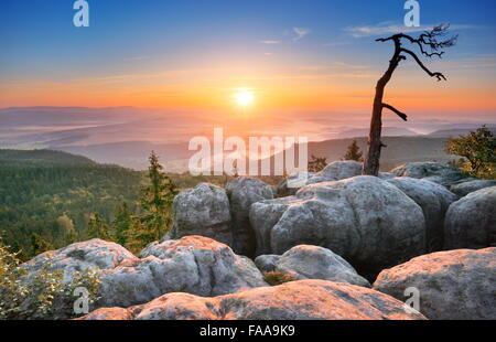 Seul arbre seul paysage à Sudètes au lever du soleil, Parc National, Pologne
