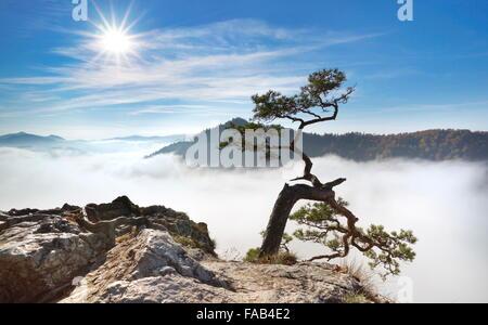 Seul arbre à lui seul les montagnes Pieniny, Pologne Banque D'Images