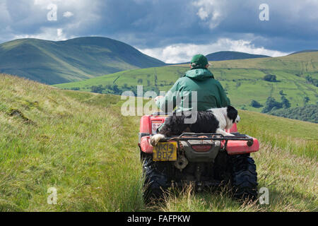 Berger sur un quad avec de berger assis derrière lui, la conduite sur les landes, UK Banque D'Images