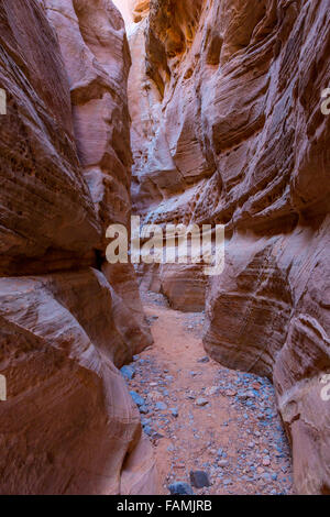 Valley of Fire, Nevada. Sur le canyon sous coupoles blanches Trail. Banque D'Images