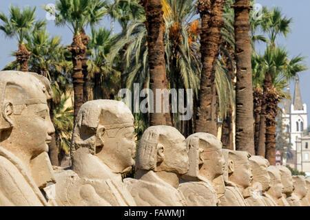Couloir de Sphinx au complexe du temple de Louxor en Égypte Banque D'Images