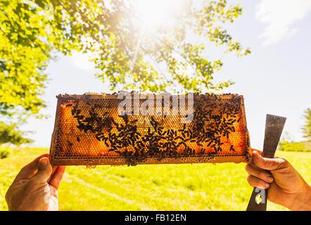 La tenue d'apiculteur miel Banque D'Images