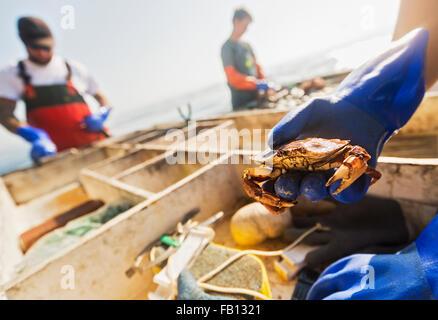 Man's hand holding crab avec deux de pêcheur en arrière-plan Banque D'Images