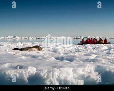 L'antarctique, mer de Weddell, Antarctique croisière passagers zodiac Phoque de Weddell visualisation reposant sur Banque D'Images