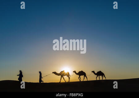 Les nomades avec des dromadaires (chameaux) au lever du soleil dans le désert du Sahara du Maroc. Banque D'Images