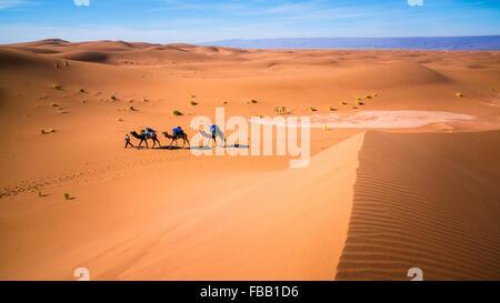 Des chameaux à travers les dunes du Sahara, l'Erg Chegaga