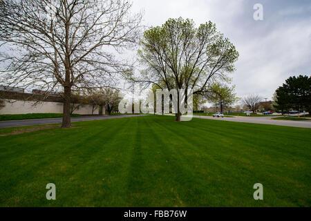 Plan large de jeunes arbres au début du printemps le long d'une route dans le midwest-nous sur un jour nuageux Banque D'Images
